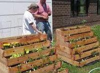 Gardening / Love Gardening...Tips and Treasures / by Aromatherapy Nature's Way LLC.