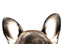 Bulldogue Francês
