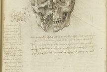 LEONARDO DA VINCI (VINCI 1452-AMBOISE 1519)