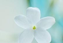 personal branding / Cose che mi piacciono e che ispirano il mio sito www.ambracaramatti.com