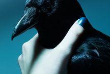 Crow&Raven / Magic