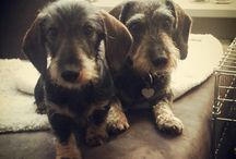 My doxies