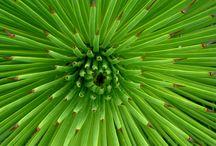 Groen + Bomen / Groen