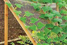 Zahradní mřížoví