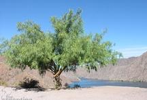 San Rafael, Mendoza / San Rafael, Mendoza un maravilloso lugar por descubrir: http://ow.ly/g69X8