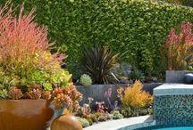 Yard / Pool area