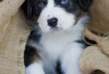 Puppies / by Addisen