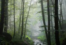 ART - Environment/nature