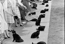 I Like Cats. / by Rebecca Napoleoni