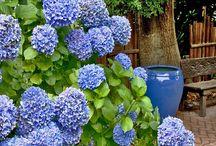 Gardening/Flowers/Vegetables / by Bonnie Dodson