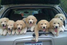 Puppy Ranch