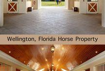 > Horse RANCH <
