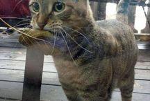 chat tisfait ! :)