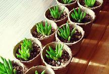 多肉植物増やし方