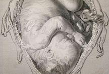 Embryologi