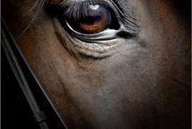 horses / by KRISTINA ALVARADO