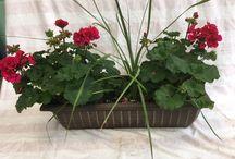 Hanging Basket Plants