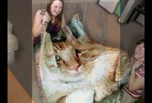 Pet Photo Blankets / For the ultimate in creative gift giving, consider a beautiful pet photo blanket. The perfect gift for your favorite pet owner, pet photo blankets combine pet pictures and love. Memories of a pet can now last forever in an exquisite pet photo blanket.