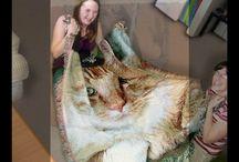 Pet Photo Blankets