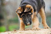 Puppies