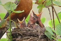 Birds, tweet, tweet