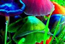 TOADSTOOLS ❤️❤️ / THE BEAUTY OF NATURE!! / by Debbie Campbell