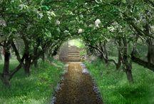 Secret Garden / by Crystalyn Bobek Hummel