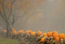 Fall / by Cheryl Finotti