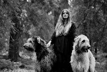 Dog & Hound