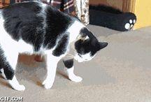 Stupidi gatti