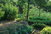 small veg plot