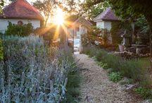Annette Lepple Photography / Annette Lepple Photography,garden photography,plant photography