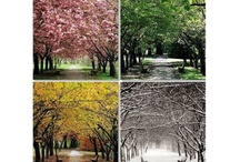 seasons / by Brooke Eulate