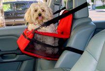 Pets and Hyundais