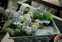 Fairy Gardens & Terrariums / by Laura Pope Photography San Jose based portrait photographer