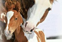 Konie małe i duże