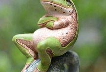 rana  pintada en piedra