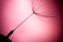 make a wish! / Pusteblume / by Frances Mieze
