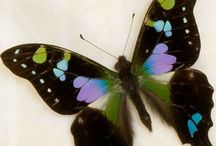 butterflies / by Angie Hallman