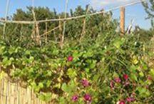 Le Jardin partagé qui cultive les Légumes et le Lien social