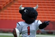 TORO / The official Houston Texans mascot.