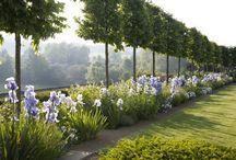Yard & Garden  / by Kjirsten Worthing