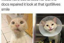 Cat Quotes Кошки Котировки