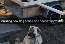 building a new dog house / by Margaret Ann Keener