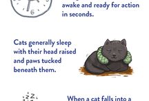 Cat pet care