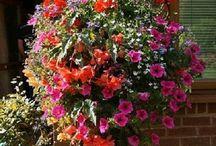 Cestas de flor colgantes