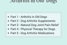 Common Old Dog Health Issues / Information on common health issues and illness symptoms that old dogs have.