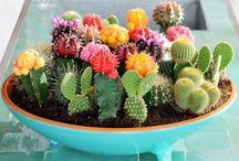 Cacti, terraniums etc