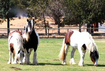My kingdom for a HORSE! / by All God's Creatures Pet Services