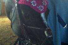 Foxglove / Hunter/Jumper/Equitation horse Foxglove / by Pink Portrait
